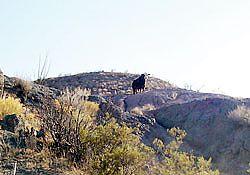 history of Las Cruces New Mexico Picacho Peak development
